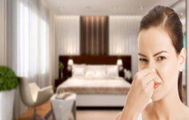 Làm thế nào để khử mùi ẩm mốc trong phòng ngủ hiệu quả nhanh chóng